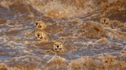 Wildlife Photographer of the Year 2021 'highly commended' images released